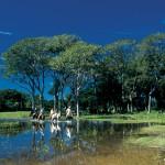 http://braziltheguide.com/pantanal/